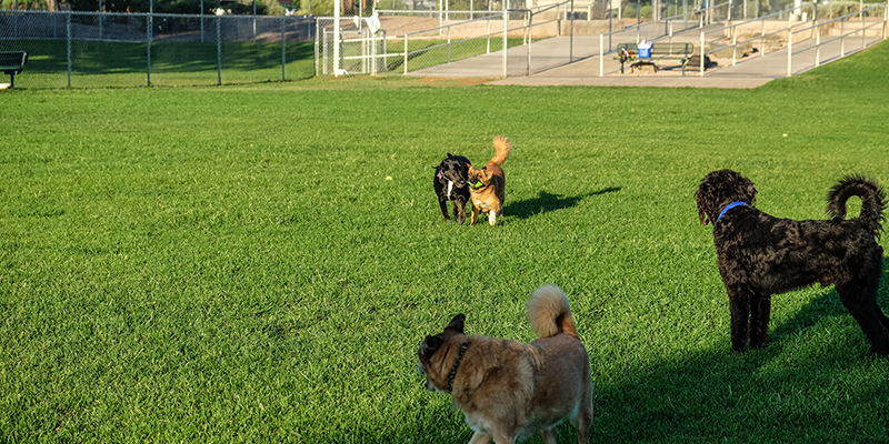 Countryside Dog Park