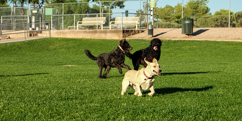 Countryside Dog Park 2